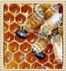 prodej medu praha